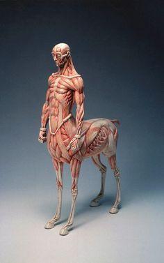 Se algum dia na escola você imaginou como seria a anatomia de seres extraordinários, provavelmente irá gostar do trabalho de Masao Kinoshita.