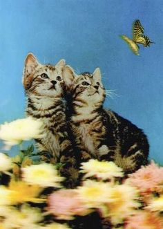 3D Lenticular Cute Cat Postcard Butterfly Twins from Lantor Ltd., $2.50:  After interlacing photos taken from multiple angels, a laminated, composite image can achieve the illusion of 3D with the help of a high-resolution lenticular lens. Here we have neat, cute retro pics of adorable kittens, purrrfect for grandma, collectors, kids, and hip, cat-themed parties! Click here to purchase: http://www.lantorlimited.com/3D-Lenticular-POSTCARD-CatS-Butterfly-p/ssp-081-pc.htm