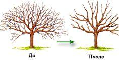 Обрезка садовых деревьев осенью