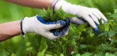 Kraut, Health And Beauty, Herbalism, Health Fitness, Cosmetics, Kiefer, Merry, Gardening, Cookies