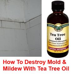 Tea tree oil is well known for its anti-bacterial and anti-fungal properties, but it is mainly used for natural health and beauty purposes; however, tea tree oil is also great for cleaning and it is very effective at removing mold and mildew. It also prohibits their return for a good while afterwards. Many folks will …