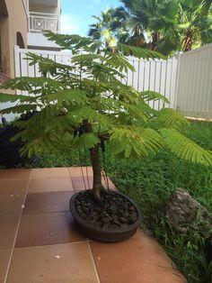 Bonsai Art, Bonsai Plants, Bonsai Garden, Bonsai Trees, Miniature Gardens, Small Trees, Live Plants, Indoor Plants, Garden Ideas