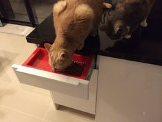 1000 images about cats on pinterest cat feeding cat feeder and cat food. Black Bedroom Furniture Sets. Home Design Ideas