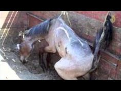 Amaryllis Farm - Horse Slaughter Lies Exposed: PART 1/2