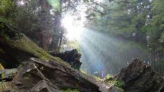 Alishan National Scenic Area, Taiwan.  Photography by Michelle Vietti.