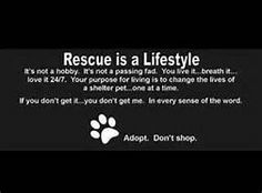 animal rescue quotes - - Yahoo Image Search Results