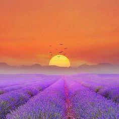Lavander FranceArt, Nature, Home And IdeasMore Pins Like This At FOSTERGINGER @ Pinterest✋