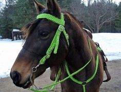 Horse Halter and Bridle made out of Paracord!