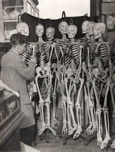 Job of the year: Skeleton cleaner.