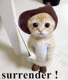 Cute Cats And Kittens Hd Wallpaper Cute Kittens Online Cute Little Animals, Cute Funny Animals, Funny Cute, Cute Dogs, Funniest Animals, Humorous Animals, Really Cute Puppies, Happy Animals, Super Funny