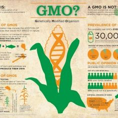 GMO? Genetically Modified Organism | Visual.ly