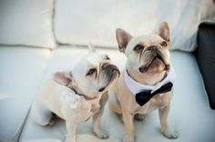 13 ways to incorporate your furry loved ones into your wedding.
