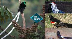 8 Jenis Burung Dengan Ekor Super Panjang
