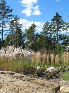 Northeast Gardener's August Checklist ....  It's hot in the August garden! Cool off with airy grasses and tactile plants that catch the breeze