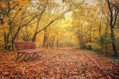 Take a seat, please... by Edina Janega on 500px