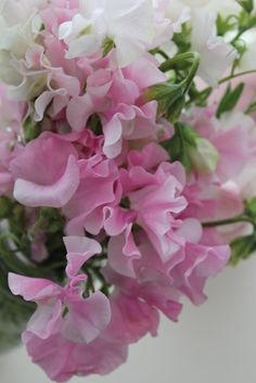 Sweet peas - Plattererbsen  via Living Cottage