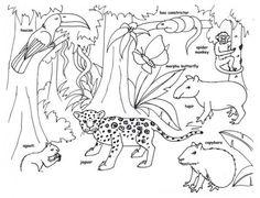 RAINFOREST COLORING PAGES  Coloringpages321com  habitats