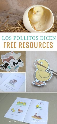 Free printables and resources for teaching the song Los pollitos dicen with kids learning Spanish. Everything you need for the song, all in one place!