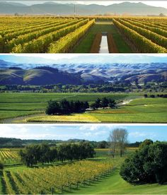 Best Wineries and Vineyards in Auckland, New Zealand