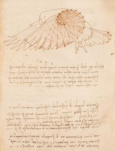 leonardo da vinci flight of birds... Oh my god it's the Fibonacci spiral :D