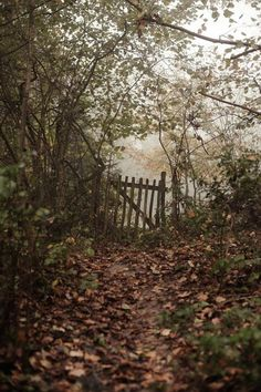 """Just imagine how many times this old worn gate has been opened after a walk down this path to a """"secret garden"""". Magic Garden, Big Garden, Autumn Rain, Autumn Leaves, Fall Trees, Photos Voyages, All Nature, Flowers Nature, Amazing Nature"""