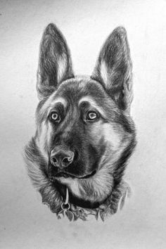 Coalburn Art Pencil Sketch Graphite Original Drawing German Shepherd Dog | eBay