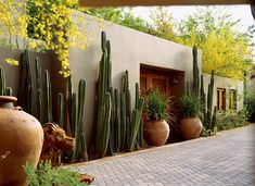 style: Cactus on guard Mexican fence post cactus (Pachycereus marginatus) clustered and staggered along a courtyard wall.Mexican fence post cactus (Pachycereus marginatus) clustered and staggered along a courtyard wall. Mexican Garden, Mexican Courtyard, Spanish Garden, Living Fence, Xeriscaping, Walled Garden, Desert Homes, Southwest Style, Spanish Style