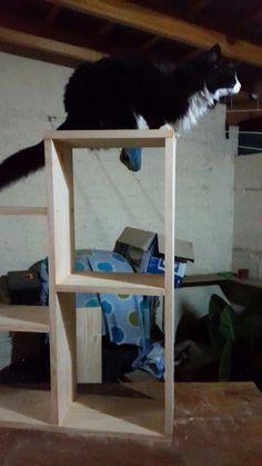 Allen sobre mi nuevo mueble!
