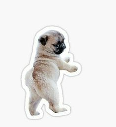 Pug along little doggies, Pug along. 2013 Cute Pug Vines of 2013 Part 3 Pug along little doggies, Pug along. Bubble Stickers, Meme Stickers, Phone Stickers, Cool Stickers, Printable Stickers, Image Tumblr, Pugs For Sale, Frühling Wallpaper, Pug Puppies