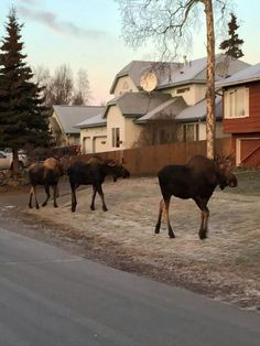 Out for a stroll in Anchorage