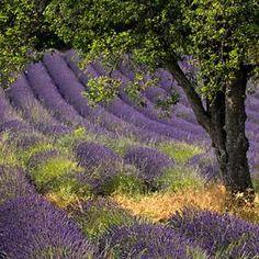 Purple - Pixdaus