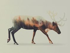 Double Exposure Animal Portraits Norwegian artist Andreas Lie creates beautiful double exposures combing forest animals and landscapes. The animals Andreas used were inspired by his surroundings in. Canvas Wall Art, Canvas Prints, Art Prints, Portraits En Double Exposition, Photo Merge, Double Exposure Photography, Norwegian Wood, Expositions, Art Graphique