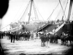 Australian soldiers and horses waiting to board a ship to travel to Africa and to war