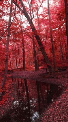 Red Forest, Magic Forest Source Flickr.com