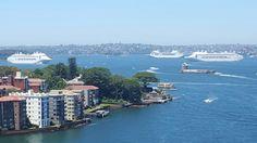 Sydney harbour & 3 P&O ocean cruisers