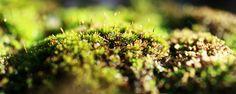 sand moss beeing fertilize