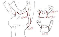 Anatomy Sketches, Anatomy Drawing, Anatomy Art, Art Drawings Sketches, Body Reference Drawing, Anatomy Reference, Drawing Reference Poses, Drawing Female Body, Hand Reference