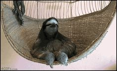 deal with it sloth paresseux