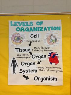 Levels of organization anchor chart science cells, science biology, science Science Cells, Science Biology, Teaching Biology, Science Lessons, Science Activities, Life Science, Science Ideas, Science Projects, Math Games