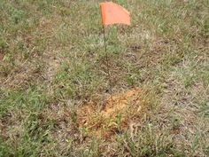 Cinnamon is not an effective fire ant treatment. We recommend Fire Ant Control: The Two-Step Plan and other approaches. http://www.extension.org/pages/14345/fire-ant-control:-the-two-step-method-and-other-approaches#.UmFDixbilBA