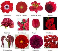 red wedding flowers - Google Search