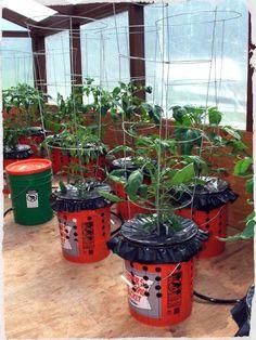 Wasilla Alaska Garden Adventures: Alaska Grow Bucket Update Self-Watering grow buckets Growing Tomatoes, Growing Vegetables, Growing Plants, Organic Gardening, Gardening Tips, Vegetable Gardening, Urban Gardening, Bucket Gardening, Indoor Gardening