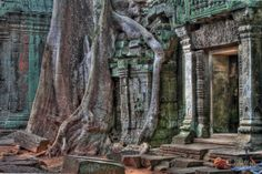Cambodia, temples, jungle, ruins, tigers: truly amazing...does it remind of something...?