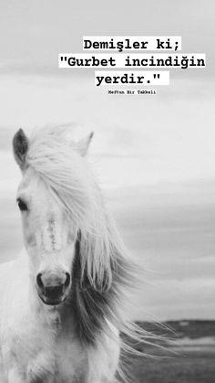 Bernard Shaw, Quran Quotes, Sufi, Earth, Horses, World, Animals, Rage, Infographic