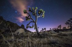 Milky Way & Night Sky photography is always amazing in the park - Check out our B&B Workshops in Joshua Tree. Learn Astro, Landscape & Timelapse Photography in the Park! See you under the Stars!