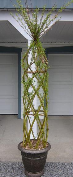 Willow structure. beautiful in urban backyard  #TheGreenBarrier #structure #willow