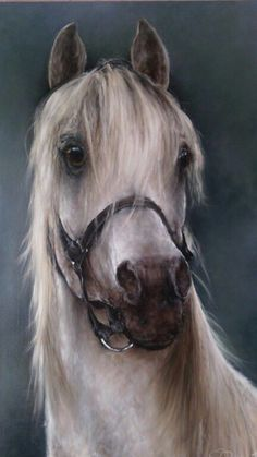www.inaustria.at Holiday Service, Beautiful Horses, Austria, Animals, Stuff Stuff, Pretty Horses, Animales, Animaux, Animal