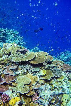 Queensland, Australia. Great Barrier Reef.