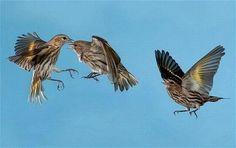 birds_13