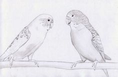 Budgies by petrunsig